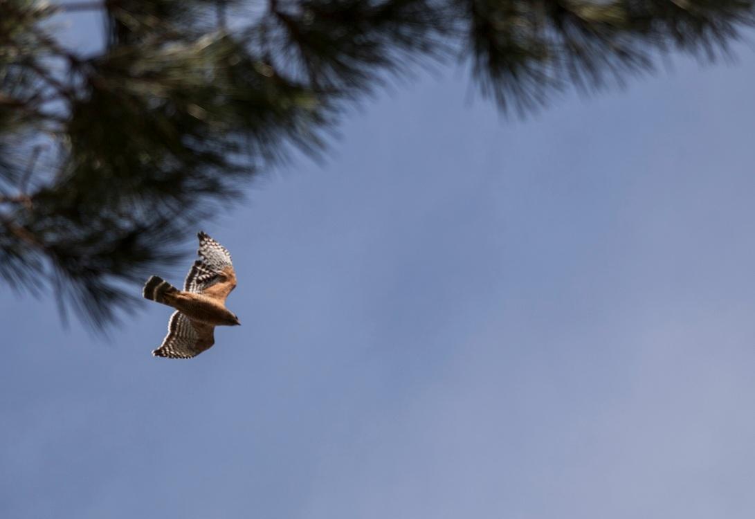 Birds_05
